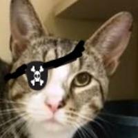 Adopt A Pet :: Capt. Flint - Memphis, TN