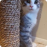 Adopt A Pet :: Ridlee - Irwin, PA