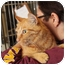 Photo 3 - Domestic Shorthair Cat for adoption in Warren, Michigan - Big Red