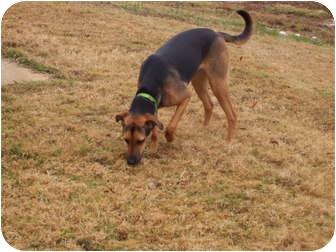 German Shepherd Dog Mix Dog for adoption in Cranford, New Jersey - Reba