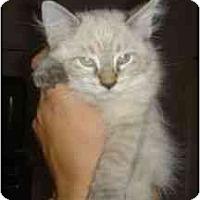 Adopt A Pet :: Sprout - Scottsdale, AZ