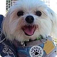 Adopt A Pet :: Micky - Ft. Bragg, CA