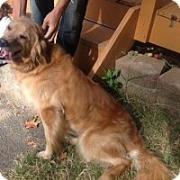 Adopt A Pet :: Kayla - New Canaan, CT