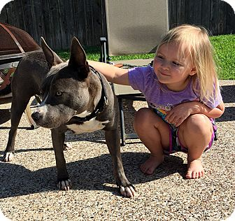 American Staffordshire Terrier Mix Dog for adoption in San Jose, California - Lucy