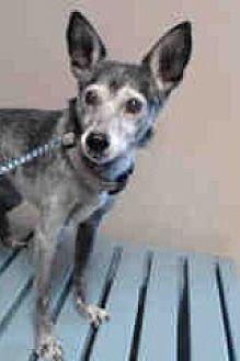 Black Mouth Cur Mix Dog for adoption in Creston, California - Granny