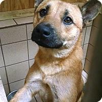 Adopt A Pet :: Pablo - San Antonio, TX