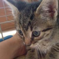 Adopt A Pet :: Hayden - St. Thomas, VI