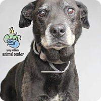 Adopt A Pet :: Charles Dickens - Knoxville, TN