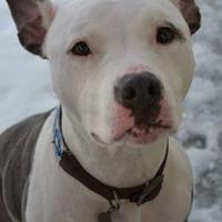 Adopt A Pet :: Maia - Cooperstown, NY