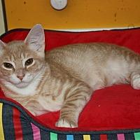 Adopt A Pet :: Fallon (LE) - Little Falls, NJ