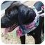 Photo 1 - Pointer/Labrador Retriever Mix Puppy for adoption in Macon, Georgia - Lizzie