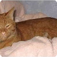 Adopt A Pet :: Louie - Cincinnati, OH