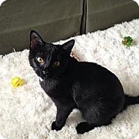 Adopt A Pet :: Bonita - Eagan, MN