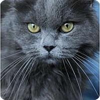 Adopt A Pet :: Tara - Columbus, OH