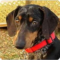 Adopt A Pet :: McClintock - Bryan, TX