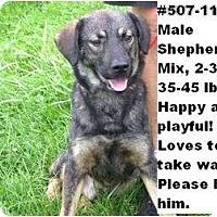 Adopt A Pet :: # 507-11 @ Animal Shelter - Zanesville, OH