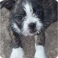 Adopt A Pet :: Teppenpaw - Plainfield, CT