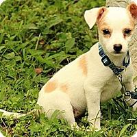 Adopt A Pet :: Paige - Staunton, VA