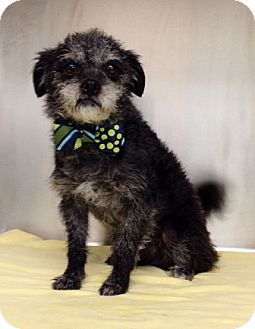Terrier (Unknown Type, Small) Mix Dog for adoption in Dublin, California - Elmer