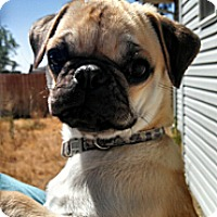 Adopt A Pet :: Frankie - Eagle, ID