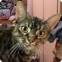 Adopt A Pet :: Libby - Andover, KS