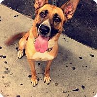 Adopt A Pet :: Sugar - Burbank, CA