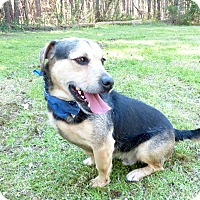 Adopt A Pet :: Kenny D - Mocksville, NC