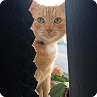 Adopt A Pet :: Garfield - Baltimore, MD