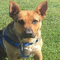 Adopt A Pet :: DAWN - Alameda, CA