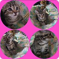 Adopt A Pet :: Adela - Athens, GA