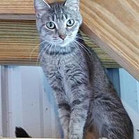 Adopt A Pet :: Sophie - Monterey, VA