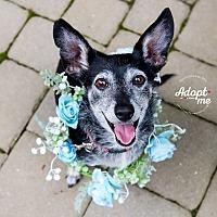 Adopt A Pet :: Betsey - Cincinnati, OH