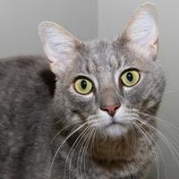 Adopt A Pet :: Mosby - Fairfax Station, VA