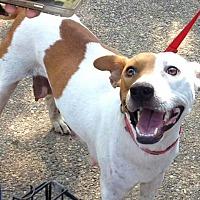 Adopt A Pet :: Mama B - Covington, TN