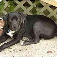 Adopt A Pet :: Louie - Kingwood, TX