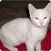 Adopt A Pet :: Hansel - Greenville, SC