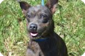 Terrier (Unknown Type, Medium) Mix Dog for adoption in Miami, Florida - Buddy