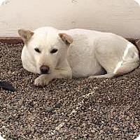 Adopt A Pet :: Feta - Los Angeles, CA