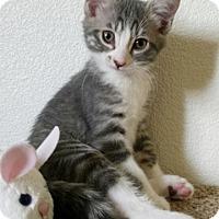 Adopt A Pet :: Peep - North Highlands, CA