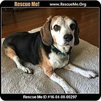 Adopt A Pet :: Zoe - Lomita, CA