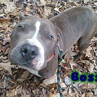 Adopt A Pet :: Boss - Eden, NC