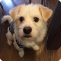 Adopt A Pet :: Tony - La Mirada, CA