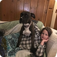 Adopt A Pet :: Luna Lovegood - Whittier, CA
