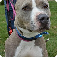 Adopt A Pet :: Azula - Meridian, ID