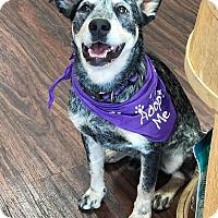 Adopt A Pet :: Buckles - Kaufman, TX