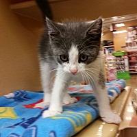 Adopt A Pet :: CRACKLE - Bridgewater, NJ