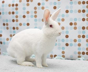 Florida White for adoption in Los Angeles, California - April Flowers