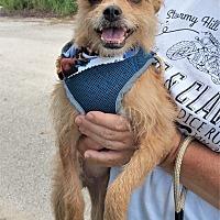 Adopt A Pet :: Smiley - Tavares, FL