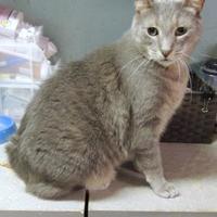 Adopt A Pet :: Corky - Westville, IN