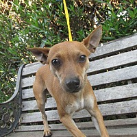 Adopt A Pet :: CHIP - Porterville, CA